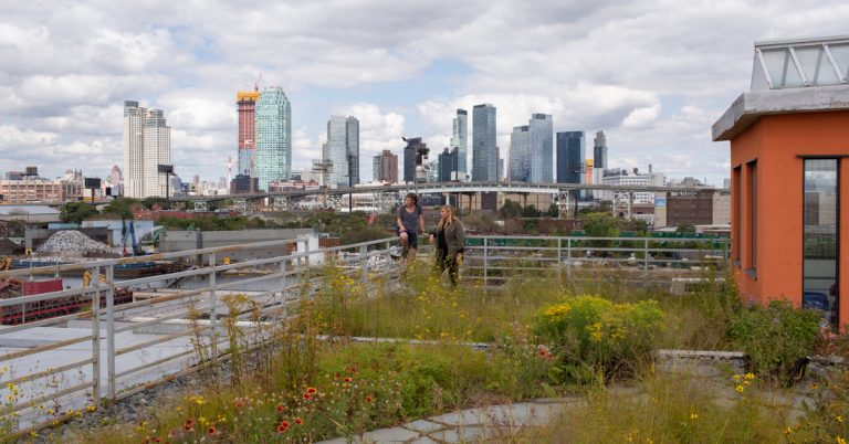 How a Rooftop Meadow of Bees and Butterflies Shows N.Y.C.'s Future