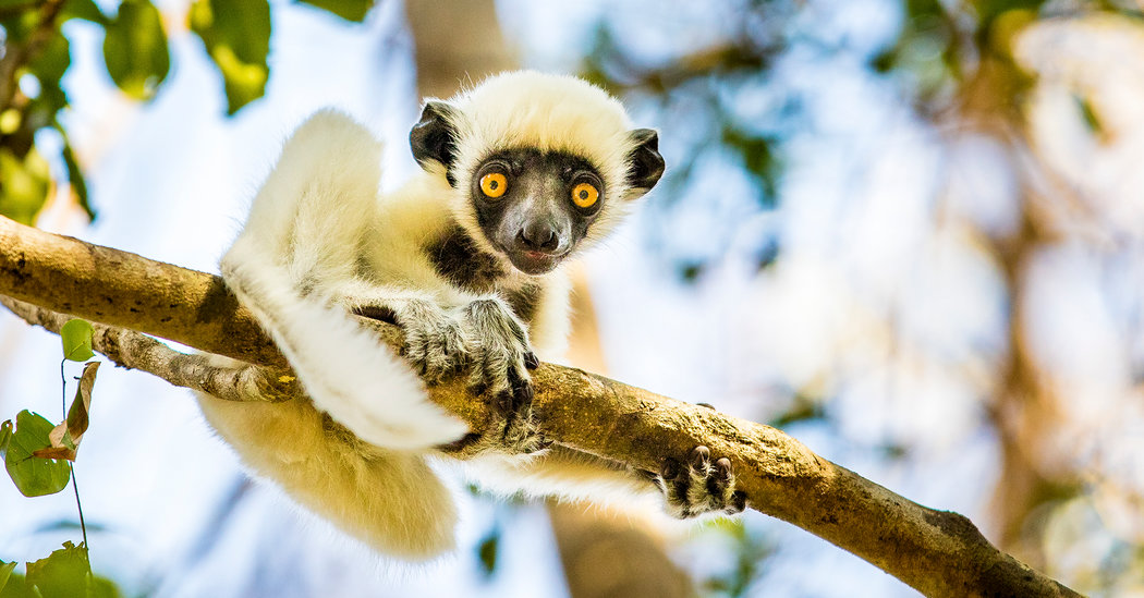 Madagascar: A Cornucopia of Beauty